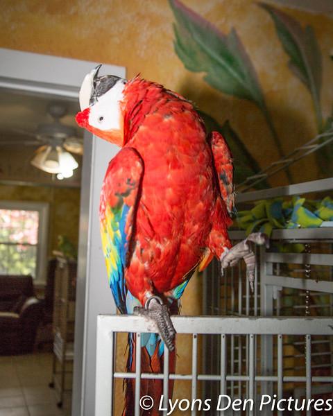 parrots 2-7.jpg