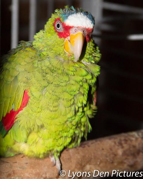 parrots 2-52.jpg