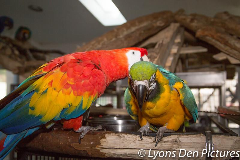 parrots 2-28.jpg