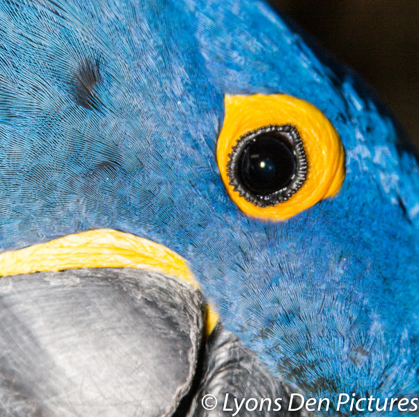 parrots 2-11.jpg