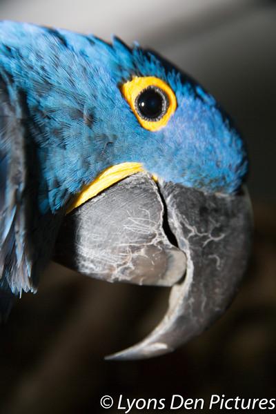 parrots 2-10.jpg