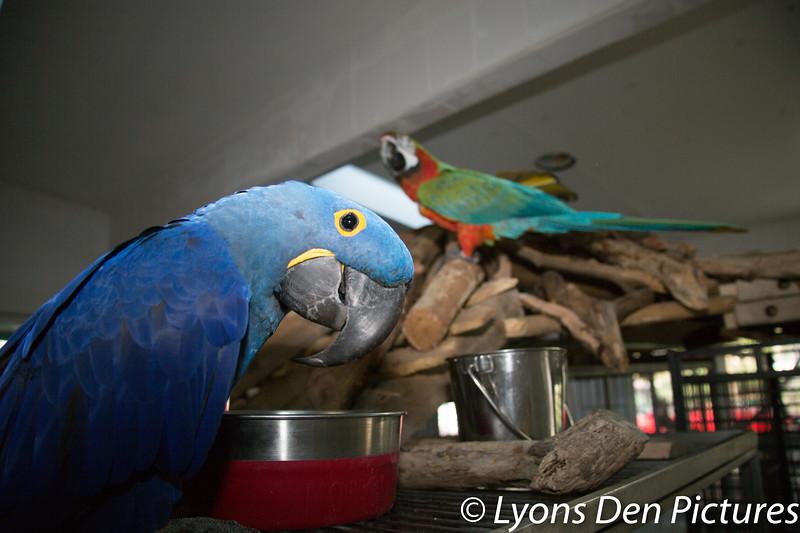 parrots 2-8.jpg