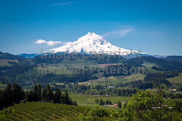 MountHood16_1001