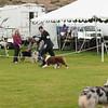 20140301_Australian Shepherds_Scottsdale -24