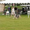 20140301_Australian Shepherds_Scottsdale -19