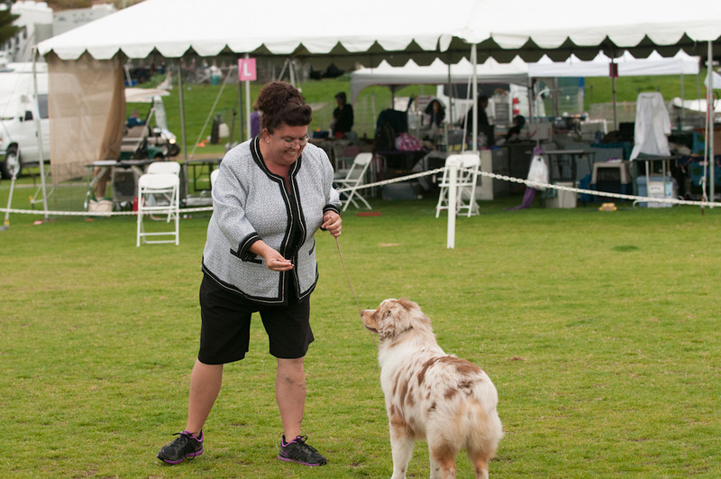 20140301_Australian Shepherds_Scottsdale -2