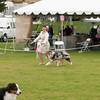 20140301_Australian Shepherds_Scottsdale -20
