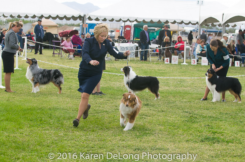 20161120_Greater Sierra Vista Kennel Club_Aussies-188