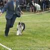 20161120_Greater Sierra Vista Kennel Club_Aussies-55