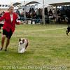 20161120_Greater Sierra Vista Kennel Club_Aussies-372