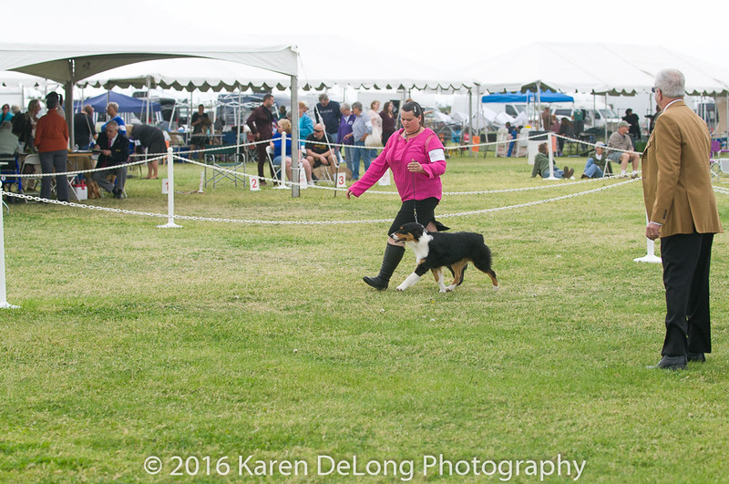 20161120_Greater Sierra Vista Kennel Club_Aussies-20
