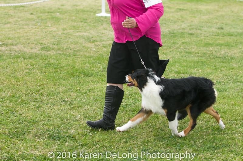 20161120_Greater Sierra Vista Kennel Club_Aussies-17