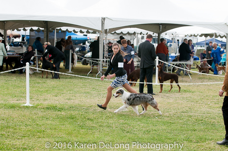20161120_Greater Sierra Vista Kennel Club_Aussies-296
