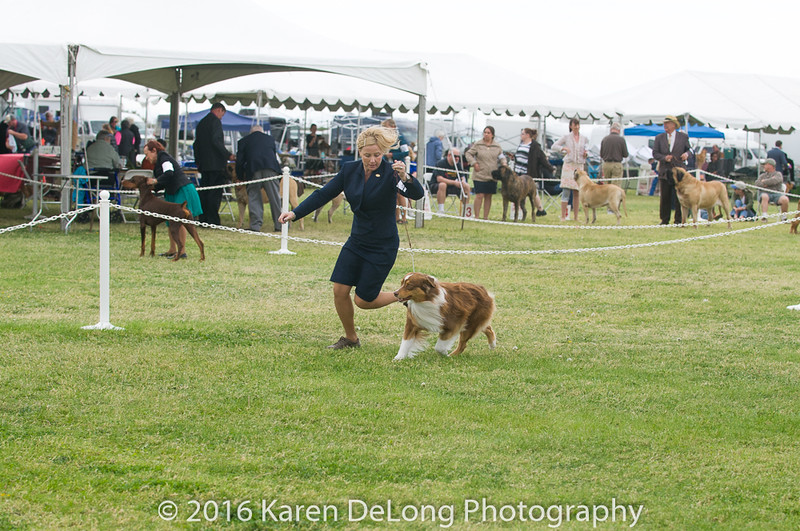 20161120_Greater Sierra Vista Kennel Club_Aussies-65