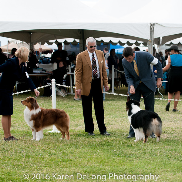 20161120_Greater Sierra Vista Kennel Club_Aussies-207