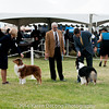 20161120_Greater Sierra Vista Kennel Club_Aussies-207