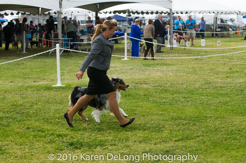 20161120_Greater Sierra Vista Kennel Club_Aussies-137