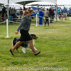 20161120_Greater Sierra Vista Kennel Club_Aussies-137