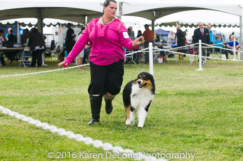 20161120_Greater Sierra Vista Kennel Club_Aussies-103