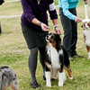 20161120_Greater Sierra Vista Kennel Club_Aussies-329