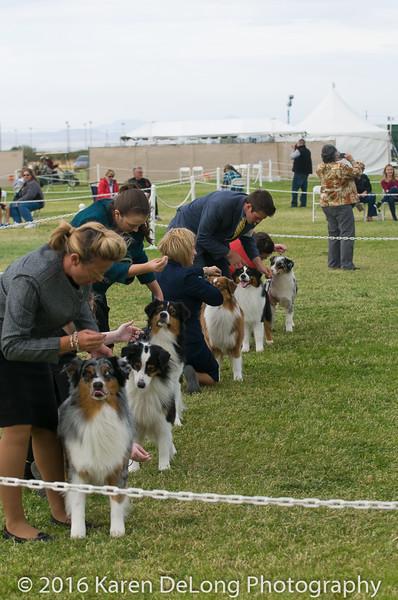 20161120_Greater Sierra Vista Kennel Club_Aussies-148