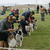 20161120_Greater Sierra Vista Kennel Club_Aussies-148