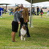 20161120_Greater Sierra Vista Kennel Club_Aussies-142