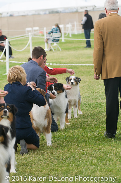 20161120_Greater Sierra Vista Kennel Club_Aussies-163