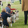 20161120_Greater Sierra Vista Kennel Club_Aussies-163