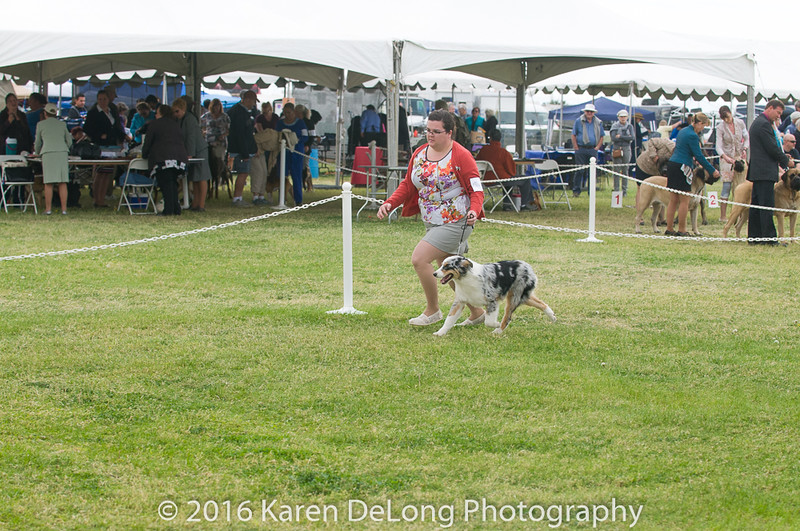 20161120_Greater Sierra Vista Kennel Club_Aussies-37