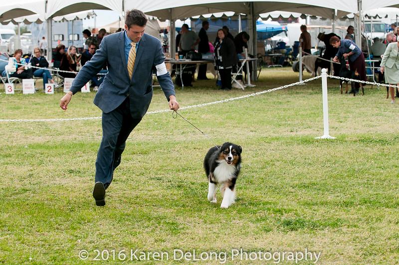 20161120_Greater Sierra Vista Kennel Club_Aussies-363