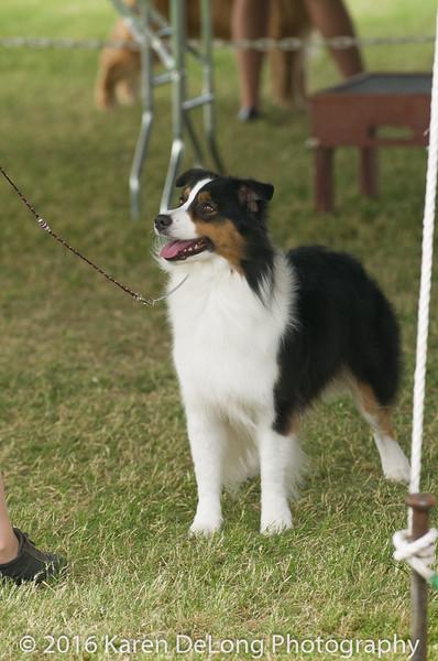 20161120_Greater Sierra Vista Kennel Club_Aussies-262