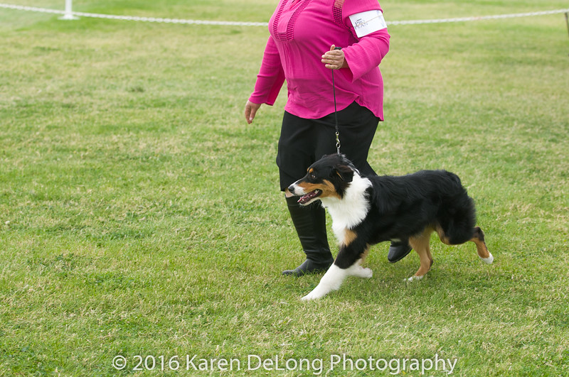 20161120_Greater Sierra Vista Kennel Club_Aussies-15
