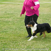 20161120_Greater Sierra Vista Kennel Club_Aussies-15