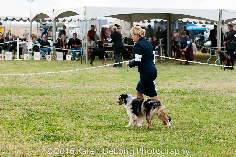 20161120_Greater Sierra Vista Kennel Club_Aussies-298