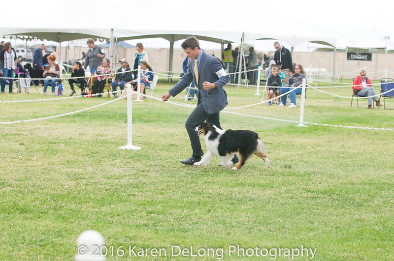 20161120_Greater Sierra Vista Kennel Club_Aussies-61