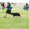 20161120_Greater Sierra Vista Kennel Club_Aussies-89
