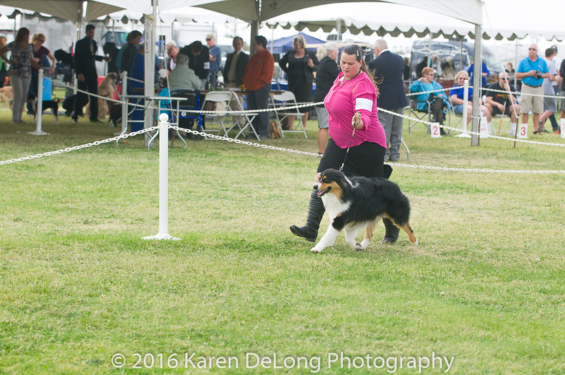 20161120_Greater Sierra Vista Kennel Club_Aussies-120