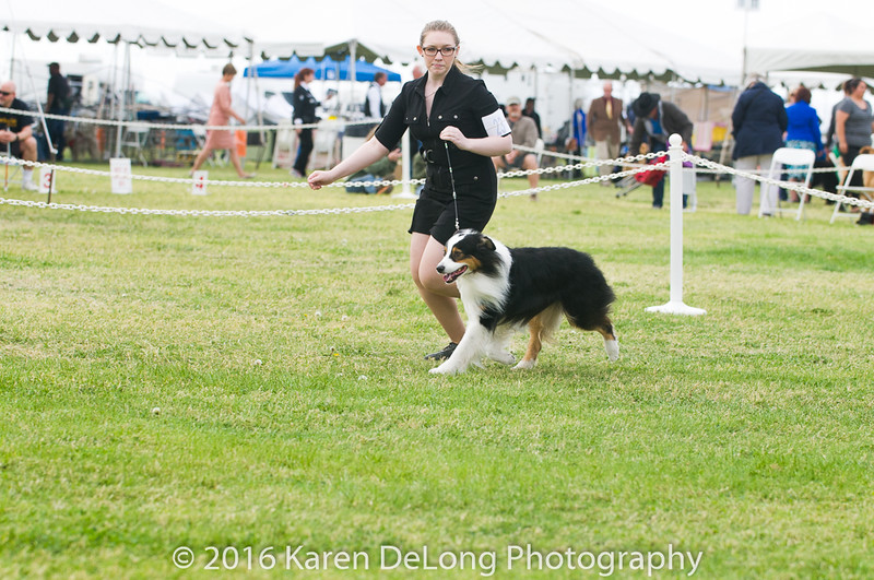 20161120_Greater Sierra Vista Kennel Club_Aussies-97