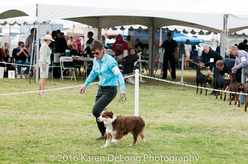 20161120_Greater Sierra Vista Kennel Club_Aussies-235