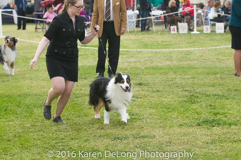 20161120_Greater Sierra Vista Kennel Club_Aussies-180