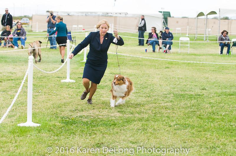 20161120_Greater Sierra Vista Kennel Club_Aussies-76
