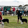 20161120_Greater Sierra Vista Kennel Club_Aussies-210
