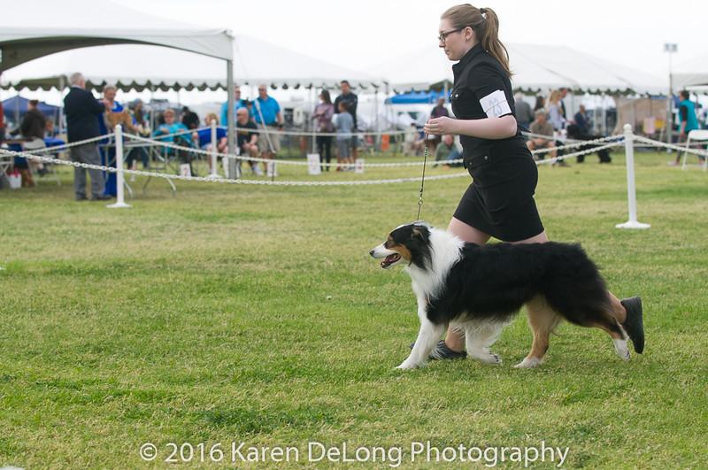 20161120_Greater Sierra Vista Kennel Club_Aussies-106