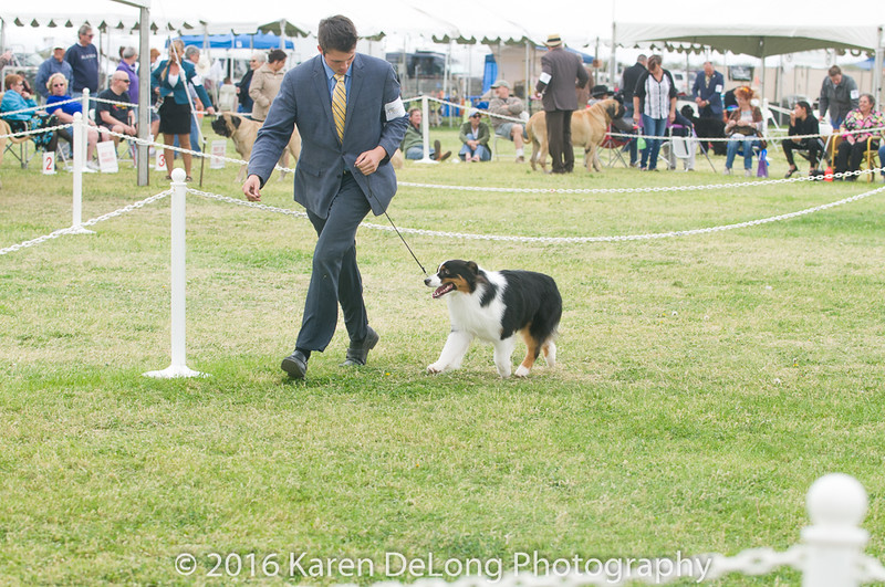 20161120_Greater Sierra Vista Kennel Club_Aussies-63