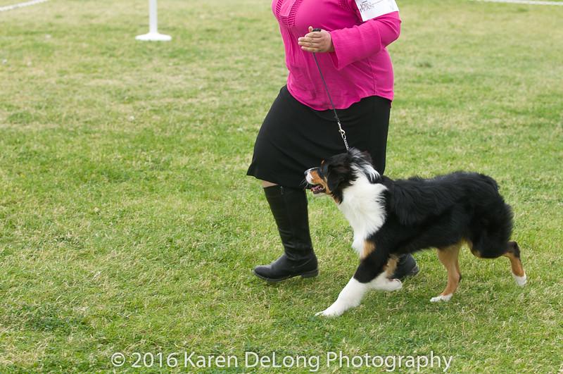 20161120_Greater Sierra Vista Kennel Club_Aussies-16