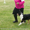 20161120_Greater Sierra Vista Kennel Club_Aussies-16