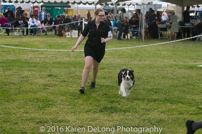 20161120_Greater Sierra Vista Kennel Club_Aussies-270