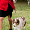 20161120_Greater Sierra Vista Kennel Club_Aussies-366