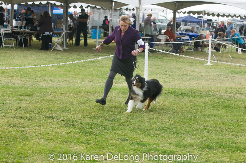 20161120_Greater Sierra Vista Kennel Club_Aussies-248